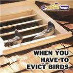 When_You_Have_to_Evict_Birds_SQUARE
